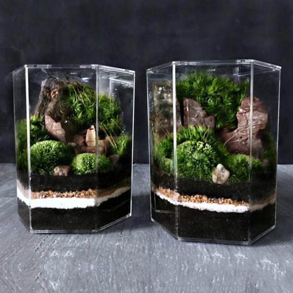 Terrarium Gifts