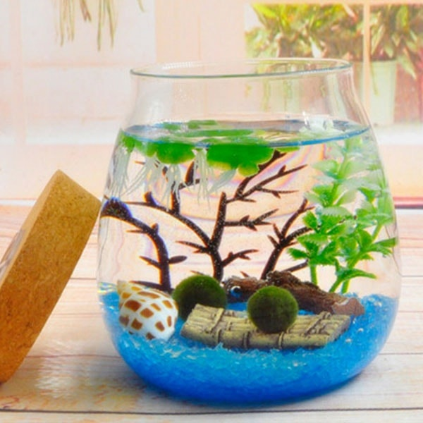 Zen Globe Aquatic Marimo Moss Ball Terrarium Kit Office Desk Accessories Mothers Day Gift from Daughters Home Table Decor Under 30 For Her