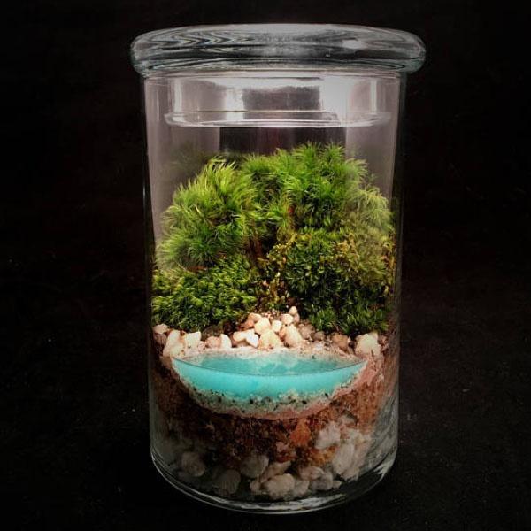 Realistic Water Terrarium Apollobox