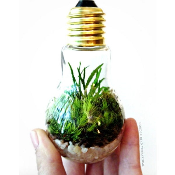 Light Bulb Plant Terrarium Currently Unavailable Apollobox