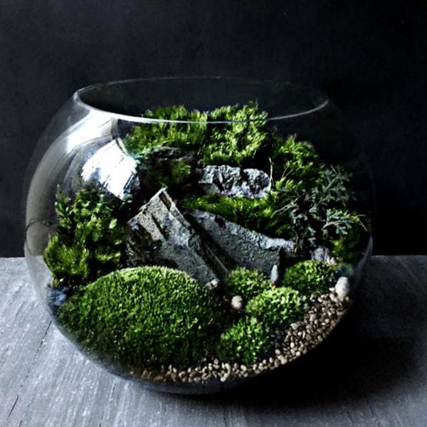 Bio-Bowl Forest World Terrarium from Apollo Box