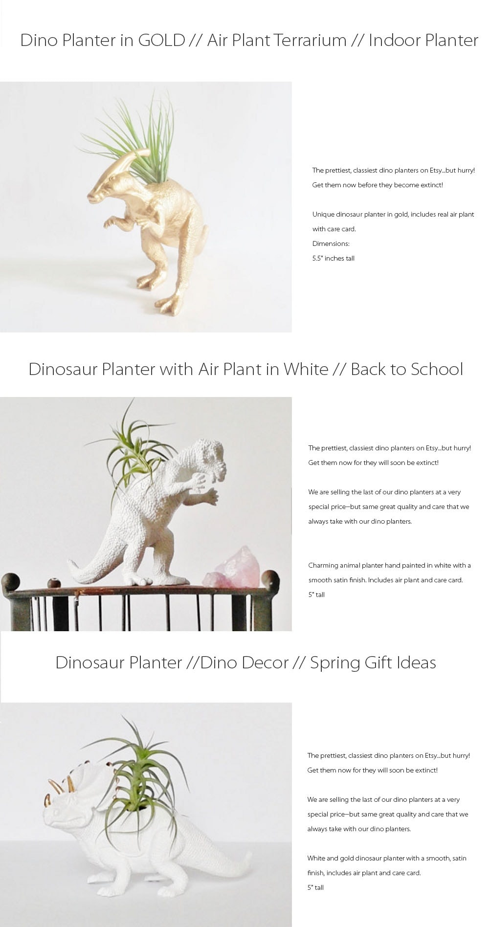Dinosaur Planter And Air Plant Get Them Now Before They Become Extinct